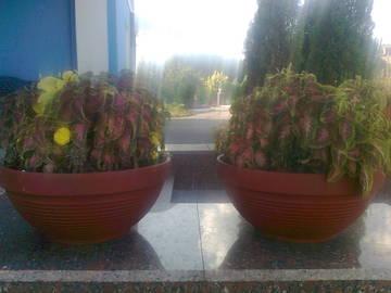http://s1.uploads.ru/t/LIfZ4.jpg