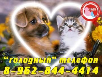 http://s1.uploads.ru/t/bWZwe.jpg