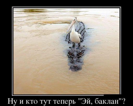 http://s1.uploads.ru/t/cjnOu.jpg