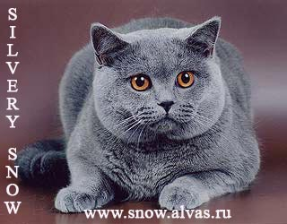 http://s1.uploads.ru/t/np6A2.jpg