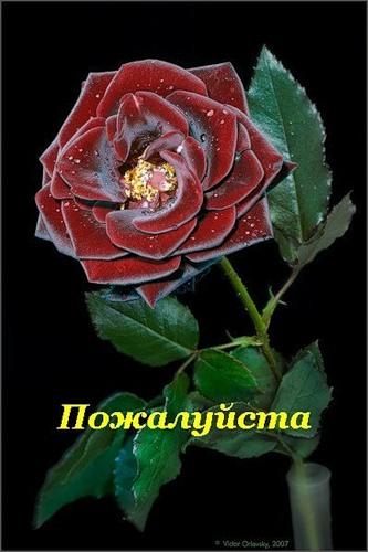 http://s1.uploads.ru/t/uRntC.jpg