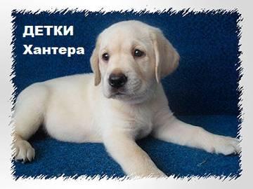 http://s1.uploads.ru/t/yoqrI.jpg