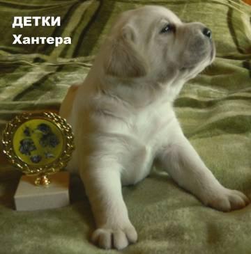 http://s1.uploads.ru/t/zUXIB.jpg